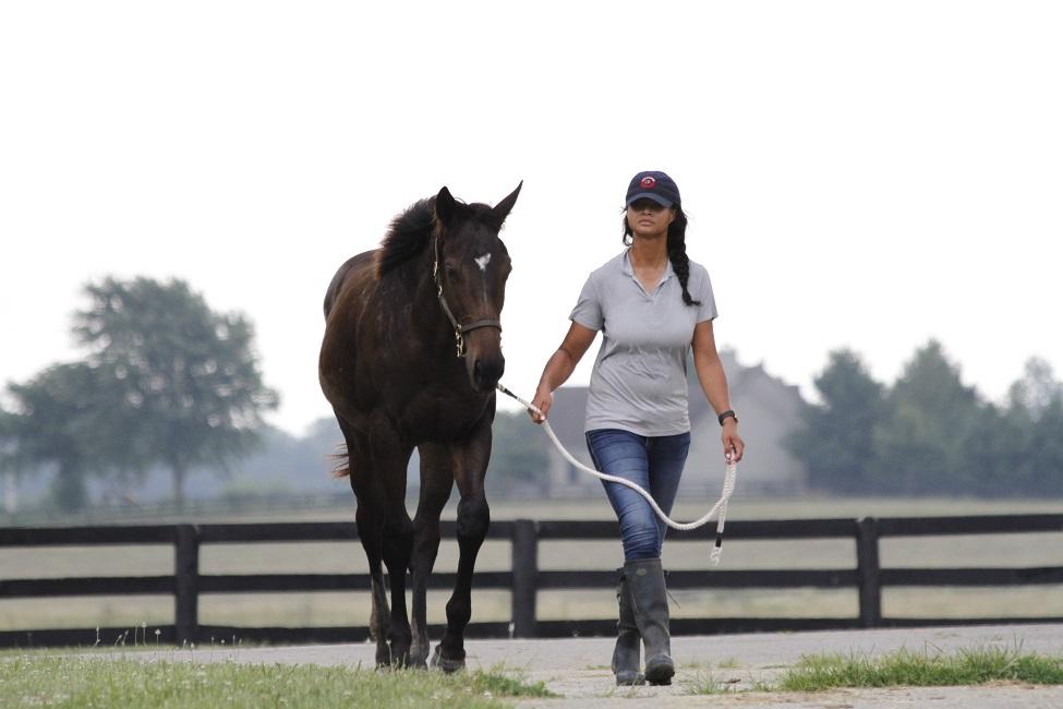 Uncategorized Archives - Kentucky Equine Management Internship